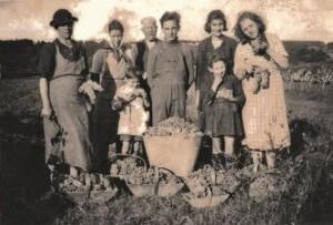 Photo de Felix et Elisabeth et leur famille pendant les vendanges